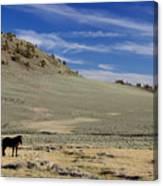 White Mountain Horse Canvas Print