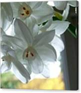 White Narcissi Spring Flower Canvas Print
