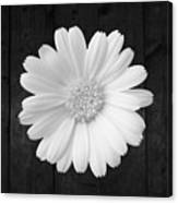 White On Wood Canvas Print