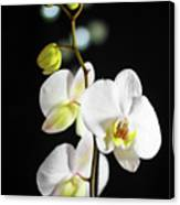 White Orchid On Black Bw Canvas Print