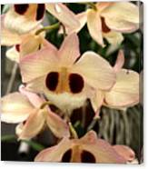 White Orchids With A Hint Of Pink Canvas Print