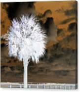 White Palm Canvas Print