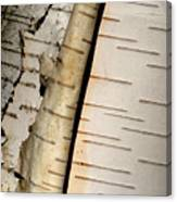 White Paper Birch Tree Bark Canvas Print