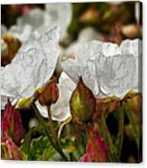 White Paper Petals Canvas Print