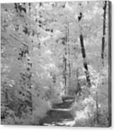 White Path Canvas Print