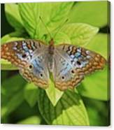 White Peacock Butterfly I Canvas Print