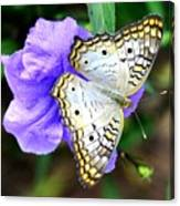 White Peacock Butterfly On Purple 2 Canvas Print