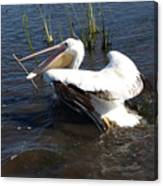 White Pelican In The Marsh Canvas Print