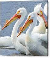 White Pelicans At Nelson Lake Canvas Print