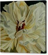 White Peony Canvas Print