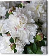 White Peony With Red Traces Canvas Print