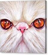 White Persian Cat Canvas Print