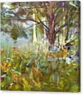 White Pine Canvas Print