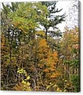 White Pine Hollow State Forest Canvas Print