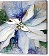 White Poinsettia Canvas Print