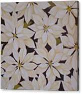 white Poinsettias Canvas Print
