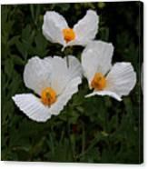 White Poppy In Cube Canvas Print