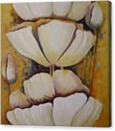 White Poppys Canvas Print