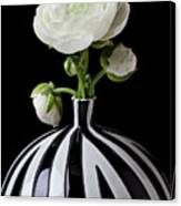 White Ranunculus In Black And White Vase Canvas Print