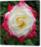 White Red Rose Canvas Print