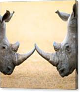White Rhinoceros  Head To Head Canvas Print