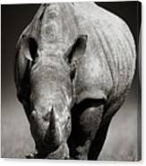 White Rhinoceros  In Due-tone Canvas Print