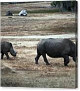 White Rhino's Canvas Print