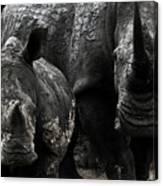White Rhinos  Canvas Print