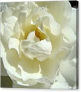White Rose Art Prints Summer Sunlit Roses Baslee Troutman Canvas Print