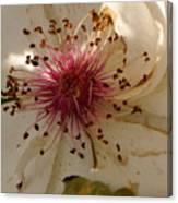 White Rose Centerpiece Canvas Print