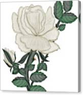 White Rose On A Winter Day Canvas Print