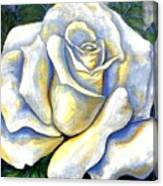 White Rose Two Canvas Print