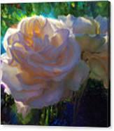 White Roses In The Garden - Backlit Flowers - Summer Rose Canvas Print