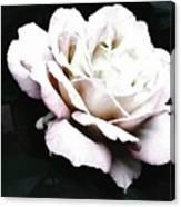 White Rose,stylization Canvas Print