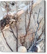 White Sand Beach Finds Canvas Print
