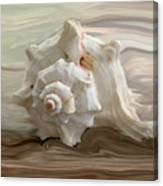 White Shell Canvas Print