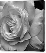 White Simplicity Rose Macro Canvas Print