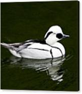 White Smew  Duck On Silver Pond Canvas Print