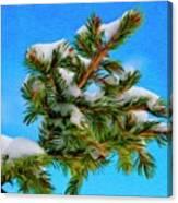 White Snow On Evergreen Canvas Print