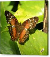 White Spotted Butterfly Canvas Print