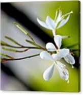 White Stem Flowers Canvas Print