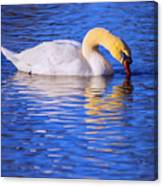 White Swan Drinking Water In A Pond Canvas Print