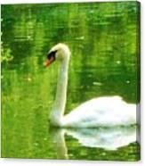 White Swan Swim In Pond Canvas Print