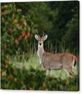 White-tail Buck Through The Trees Canvas Print