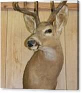 White Tail Buck Canvas Print