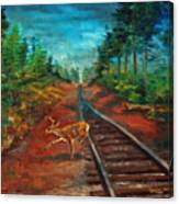 White Tail Deer In Southern Woods Canvas Print