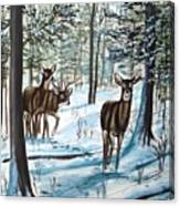 White Tail Deer In Winter Canvas Print
