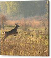 White Tail Morning Canvas Print