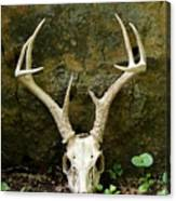 White-tailed Deer Skull In The Woods Canvas Print