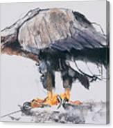 White Tailed Sea Eagle Canvas Print